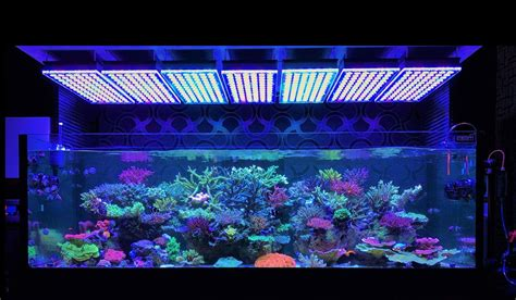 aquarium led lights amazing japanese reef tank atlantik v4 led lighting