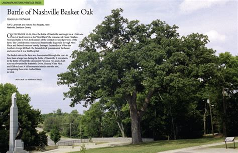 trees nashville news and information from trees nashville
