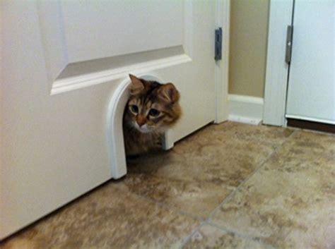 large cat doors interior doors cat door cathole interior pet door with cleaning brush