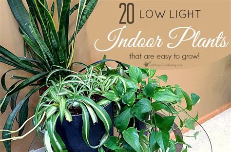 Plants Low Light low light indoor plant list 20 houseplants that are easy