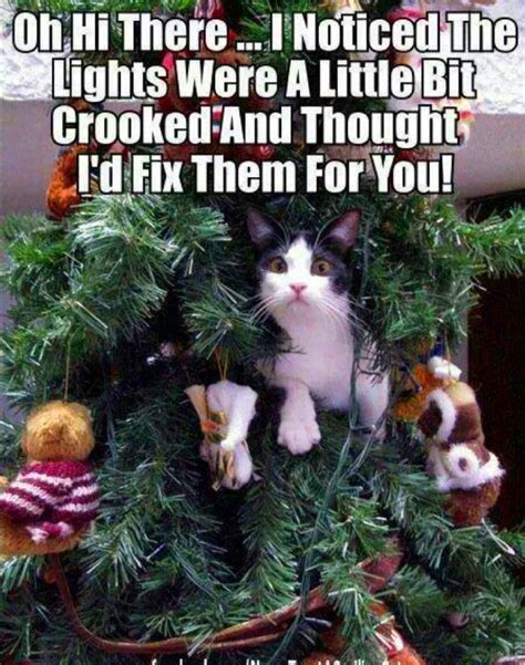 tree with cats cat in tree meme jokes memes pictures