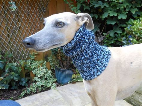 knitting for greyhounds quits to knit sweaters for rescue dogs mnn