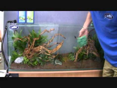 mise en eau installation d un aquarium