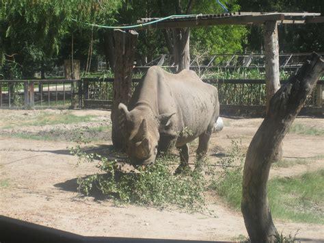 Garden City Zoo File Rhinoceros At Richardson Zoo Garden City Ks Img