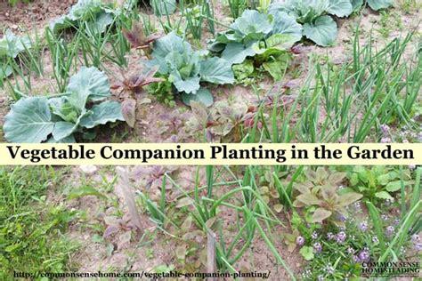 companion flowers for vegetable garden vegetable companion planting in the garden
