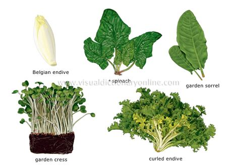 plant food that comes with flowers food kitchen food vegetables leaf vegetables 6
