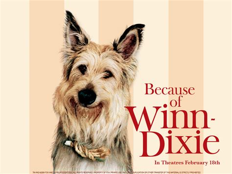 pictures of the book because of winn dixie on the nightstand in the notebook because of winn dixie