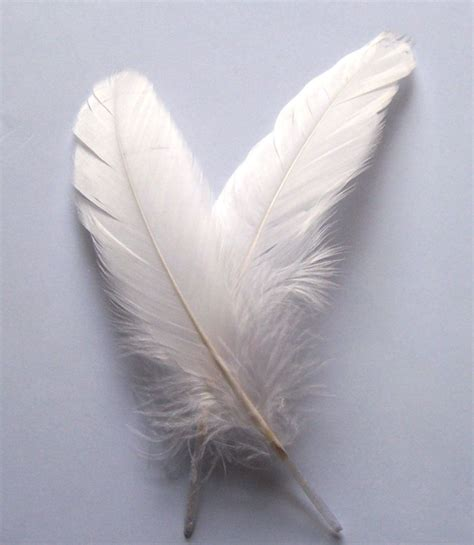 feather crafts for white feathers for arts and crafts