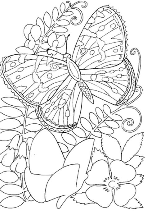 challenging coloring pages for adults butterfly and