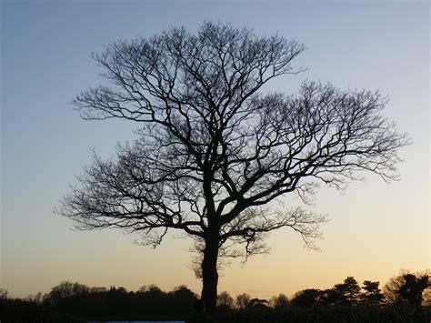 winter trees winter tree 3di philosophy