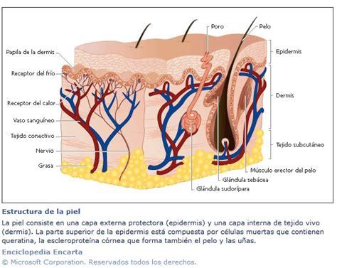 cadenas queratinicas la piel apuntes biologia foros de educaci 243 n y