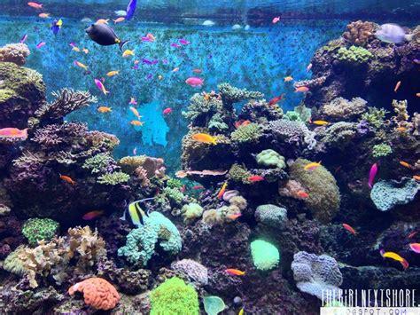 sea aquarium singapore the next shore