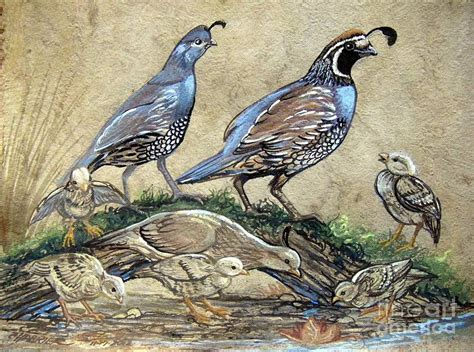 paint color quail covey of quail painting by shoemaker magdaleno