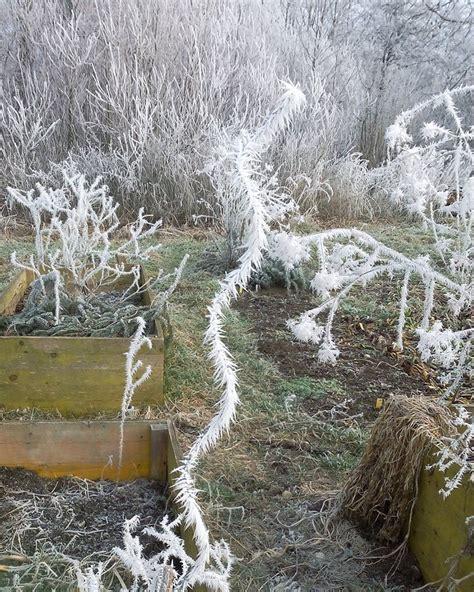 Der Garten Im Winter by Der Garten Im Winter Knollen Co E V