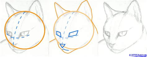 cat step step how to draw a cat step by step how to draw a cat