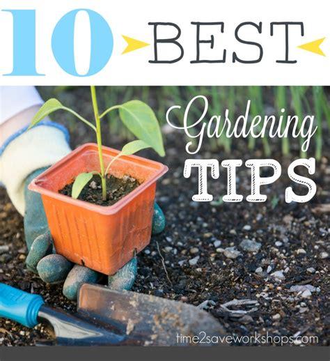 tips for planting a vegetable garden garden like the pros 10 of the best vegetable garden