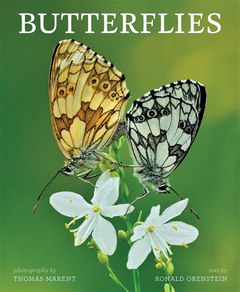 butterfly picture books bug eric butterflies a great gift book but