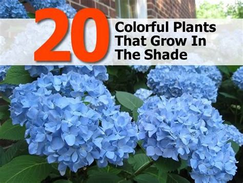 small plants that don t need sun 20 colorful plants that grow in the shade