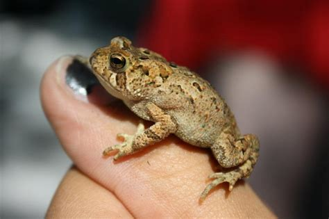 Baby Toad! | My Photography | Pinterest