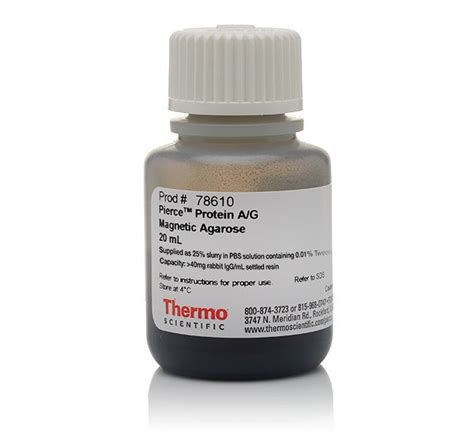 magnetic protein g protein a g magnetic agarose thermo fisher