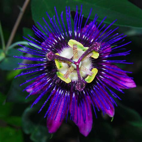flower images ed goodfellow web images flowers flower 2