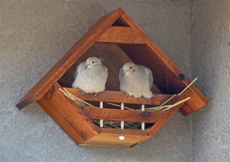 mourning dove house plans mourning dove bird house