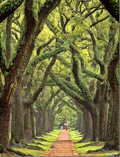 where to place a tree boulevard oaks beautiful for the and pathways