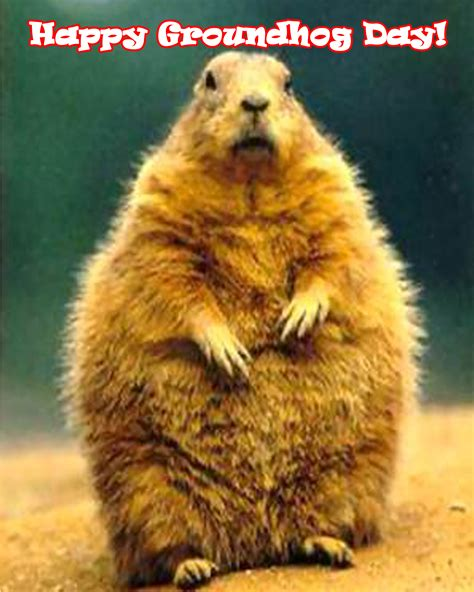 the groundhog day groundhog day waow weather
