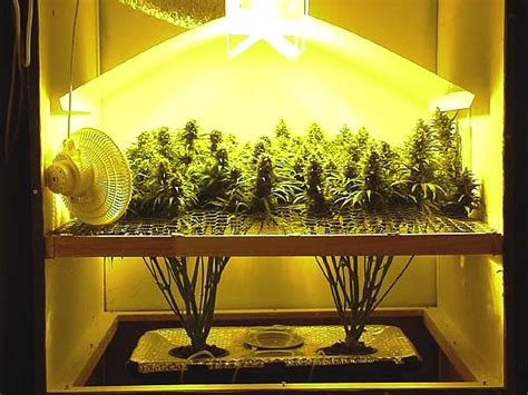 conseils importants pour la culture du marijuana en interieur marijuana bio acheter