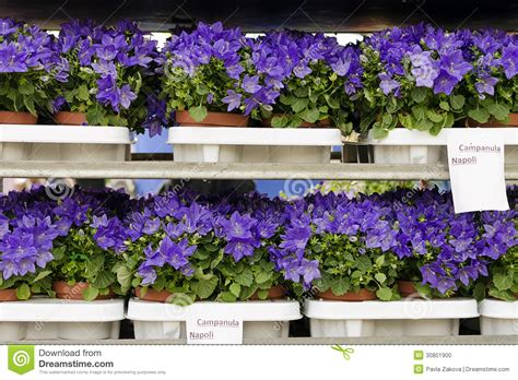 garden flowers for sale flowers for sale stock photo image 30801900