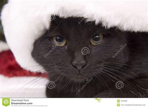 large santa hats black cat with large santa hat stock photo image 1545398