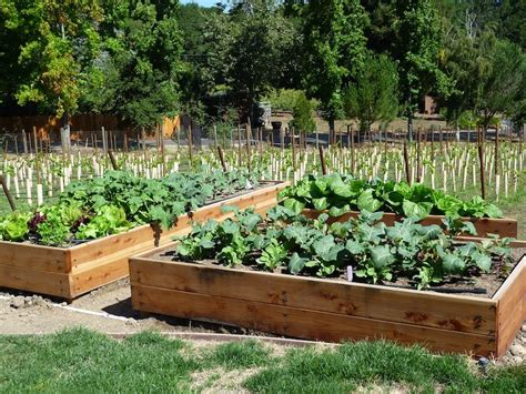 a vegetable garden box foods for start your fall and winter vegetable