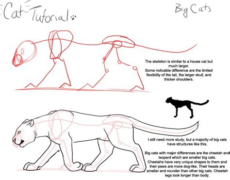 cat tutorial large cats on cat anatomy big cats and
