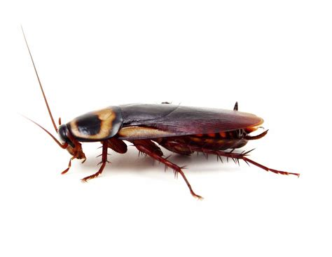 Get Rid Of Moisture In Basement by Rid Of Roaches How To Build A House