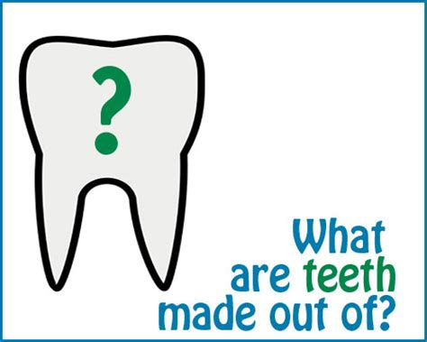 what are what are teeth made out of mcneely family dentistry