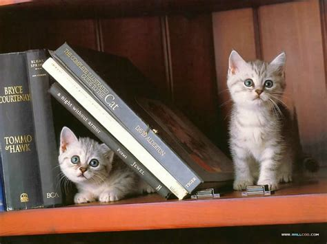 cat picture book books cats book ends animals cats hd desktop