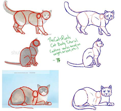 Cat Tutorial By Thecatspupil On Deviantart