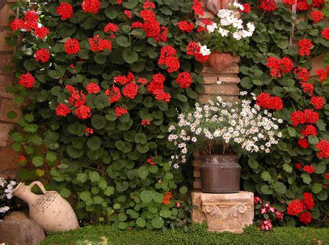 los patios cordoba patios