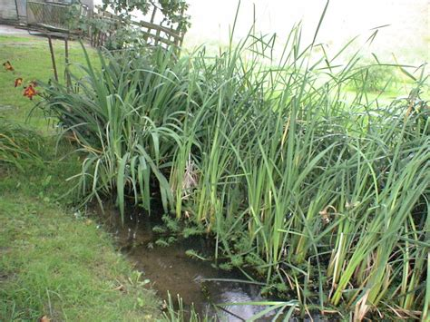 water for plants ponds and water features dunton family farm