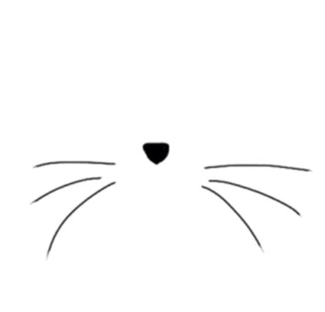 cat nose and whiskers the way of the whiskers cat box zen