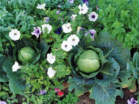 garden fruits and vegetables where to grow fruits and vegetables hgtv
