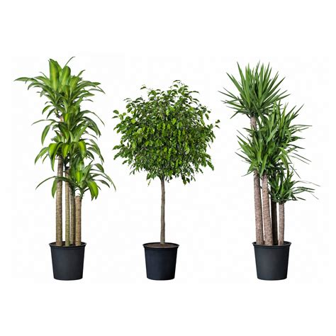 house for plants indoor pot plant rseapt org