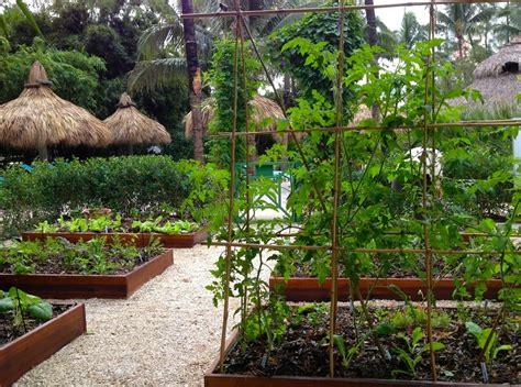 vegetable gardening in south florida 187 summer gardening in south florida