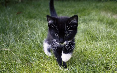 ideas black cat black and white cat names 250 cool ideas