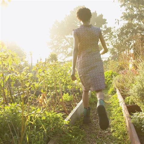 Garden Of Hormone Balance 17 Best Images About Herbs For Reproductive Health