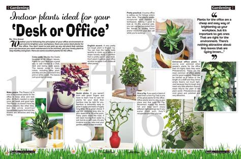 plants for the office 7 indoor plants ideal for your desk or office social diary