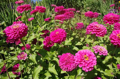 garden flowers pictures and names garden flowers pictures and names garden ftempo