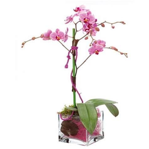 orchid 233 es 224 offrir vari 233 t 233 s d orchid 233 es communesle fleursinfo