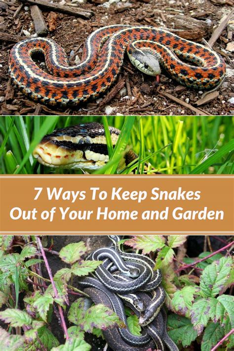 how to make a snake out of 7 ways to keep snakes out of your home and garden home
