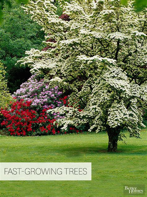 fast growing trees fast growing trees
